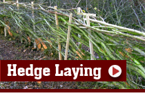 P&S Durber Shropshire Fencing Contractors - Hedge Laying Shropshire